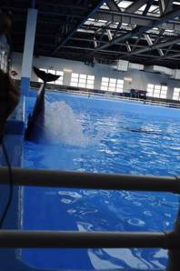 Dolphin Commits Suicide in Hong Kong